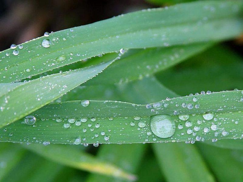 Все о воде и ее свойствах