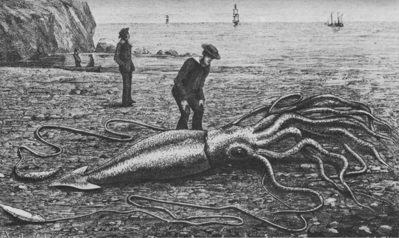 Гигантские кальмары See page for author [Public domain]_Wikimedia_Commons_https://commons.wikimedia.org/wiki/File%3AGiant_squid_catalina2.png