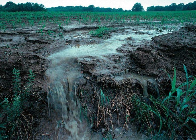 Стоковые воды By Lynn Betts [Public domain]_Wikimedia_Commons_https://commons.wikimedia.org/wiki/File%3ARunoff_of_soil_%26_fertilizer.jpg